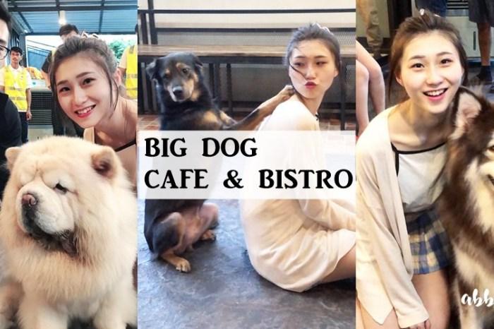 曼谷景點 | Big Dog Cafe & BISTRO 療癒大狗狗主題咖啡廳 拉查達火車夜市旁