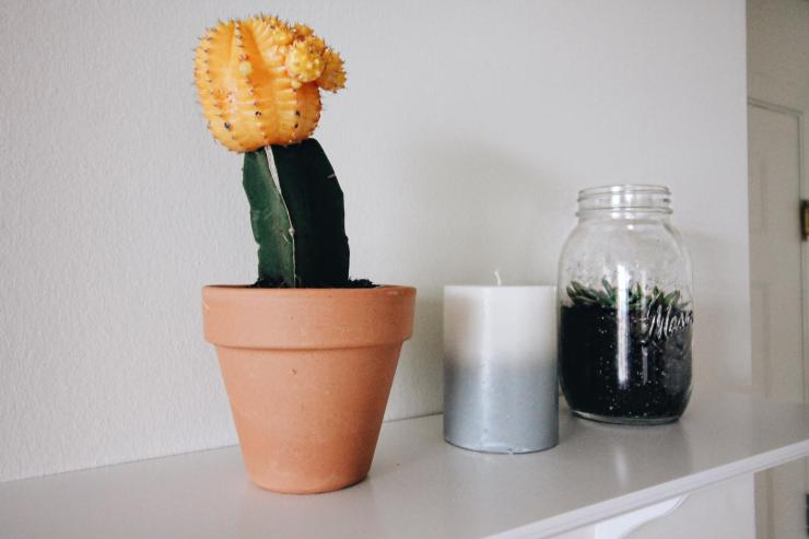 cacti shelves