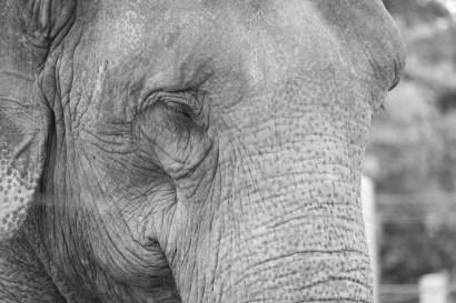 elephantbw