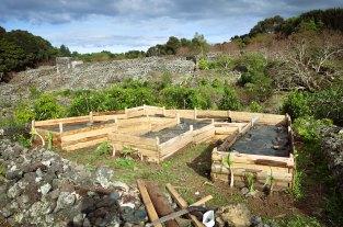 Spring Vegetable Garden Web-2