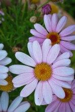 Spring flowers in the garden of AbbyVille