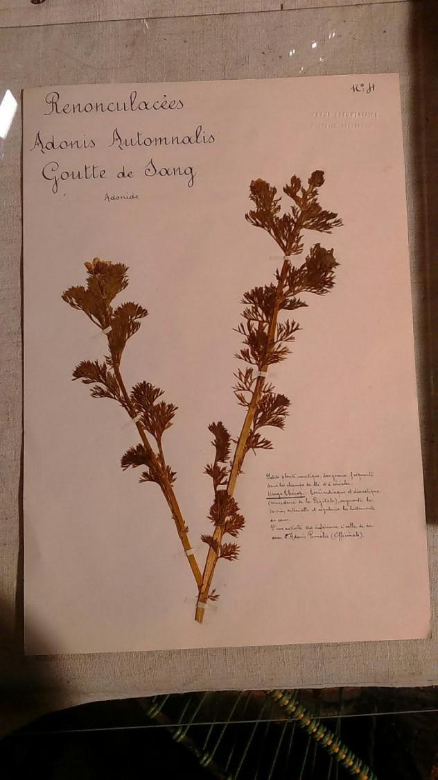Feuille d'herbarium