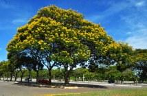 O programa aponta os benefícios ambientais e econômicos que as áreas verdes urbanas - Foto: Marcelo Camargo/Agência Brasil