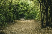 country-environment-track-leaf-rambling-footpath