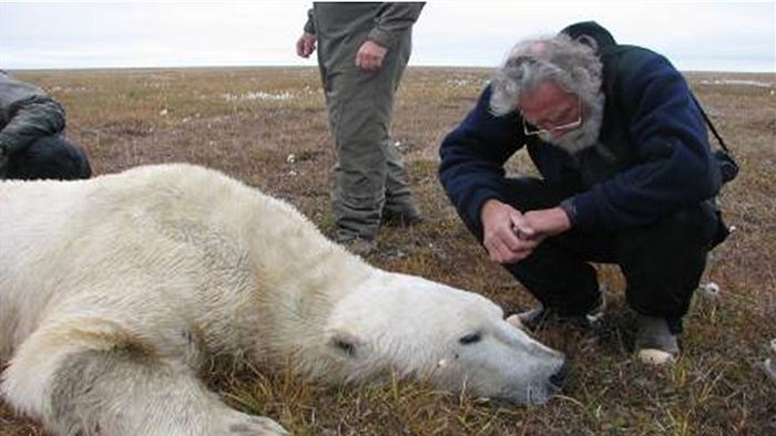 Inside The Bear's Den With Zoologist Hank Harlow