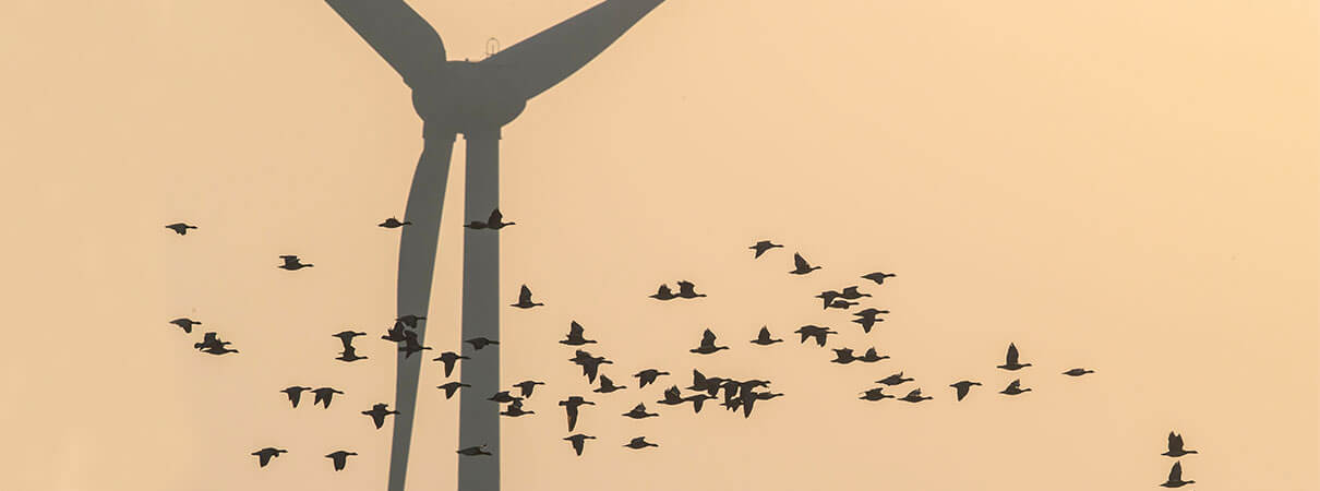 How Many Birds Are Killed By Wind Turbines?