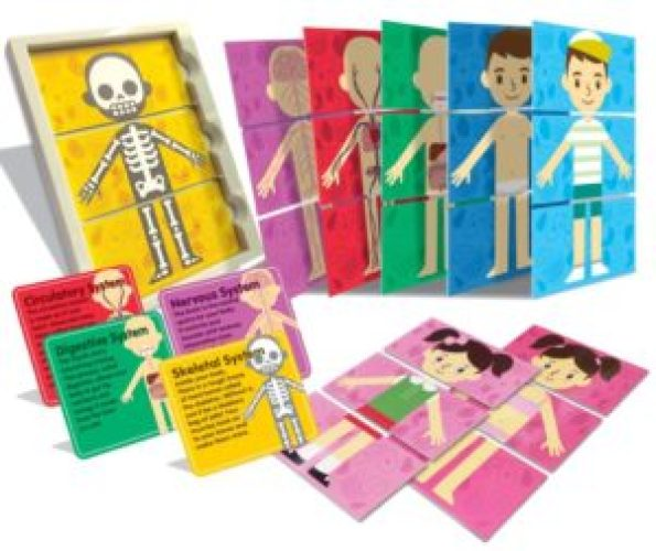 Body Systems Puzzle