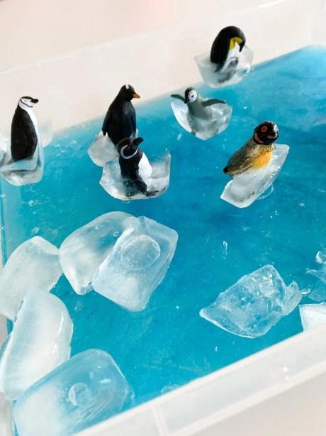 penguin sensory ice activity