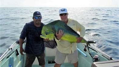 Photo of Ya hay reservaciones de extranjeros para la pesca deportiva