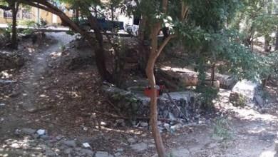 Photo of En riesgo área verde de la colonia El Limón