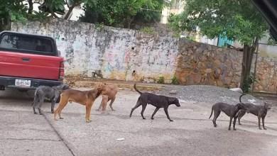 Photo of Controversia por el incremento de la población canina en el Infonavit