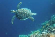 Photo of Restricción para el uso recreativo de las playas mejora el entorno acuático