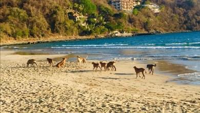 Photo of Reportan jauría de perros en La Ropa