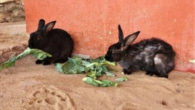 Photo of Animales de la isla de Ixtapa se conservan con la ayuda de restauranteros