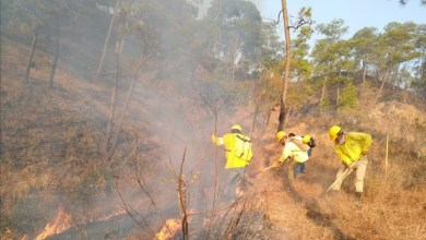 Photo of Disminuyen incendios forestales en Guerrero; en 2019 se registraron 160 contra 129 de este año: SEMAREN