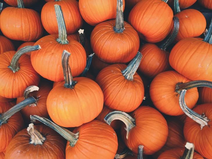 halloween dynie