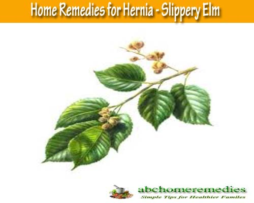 Slippery: Elm Home Remedies for Hernia