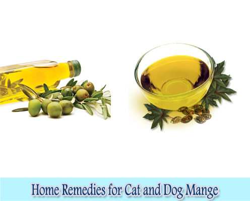 Castor Oil and Olive Oil : Home Remedies for Cat and Dog Mange