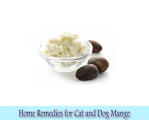 Shea butter : Home Remedies for Cat and Dog Mange