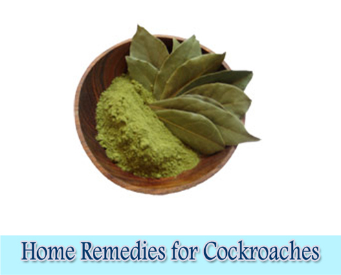 Bay Leaves : Home Remedies for Cockroaches
