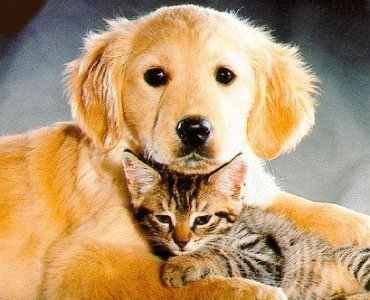 Home remedies for Cat and Dog mange