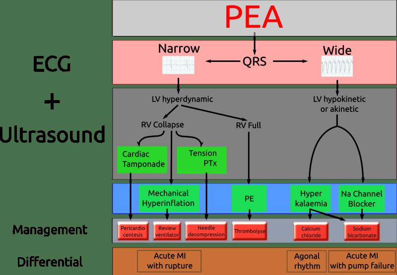 littman_pea_algorithm.png