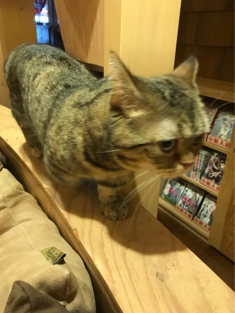 動物 | 猫 | 高品質で安いネイルサロンABCネイル 池袋店