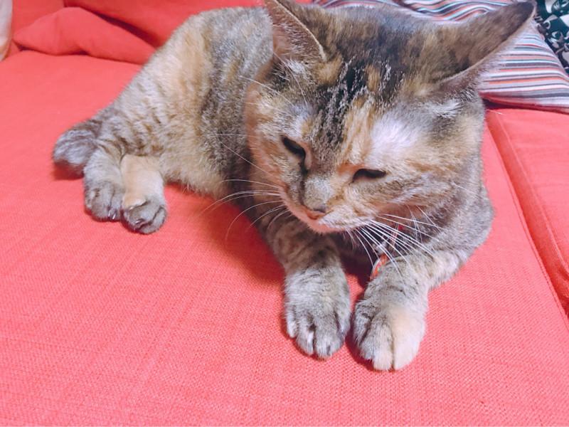 ペット | 猫 | 高品質で安いネイルサロンABCネイル 新宿店