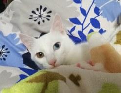 癒し | 愛猫 | 高品質で安いネイルサロンABCネイル 新宿店