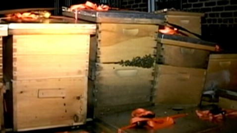 abc bees crates jef 120823 wblog 3 Million Bees Seized From New York Beekeepers Home