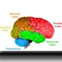The Brain of Man 1
