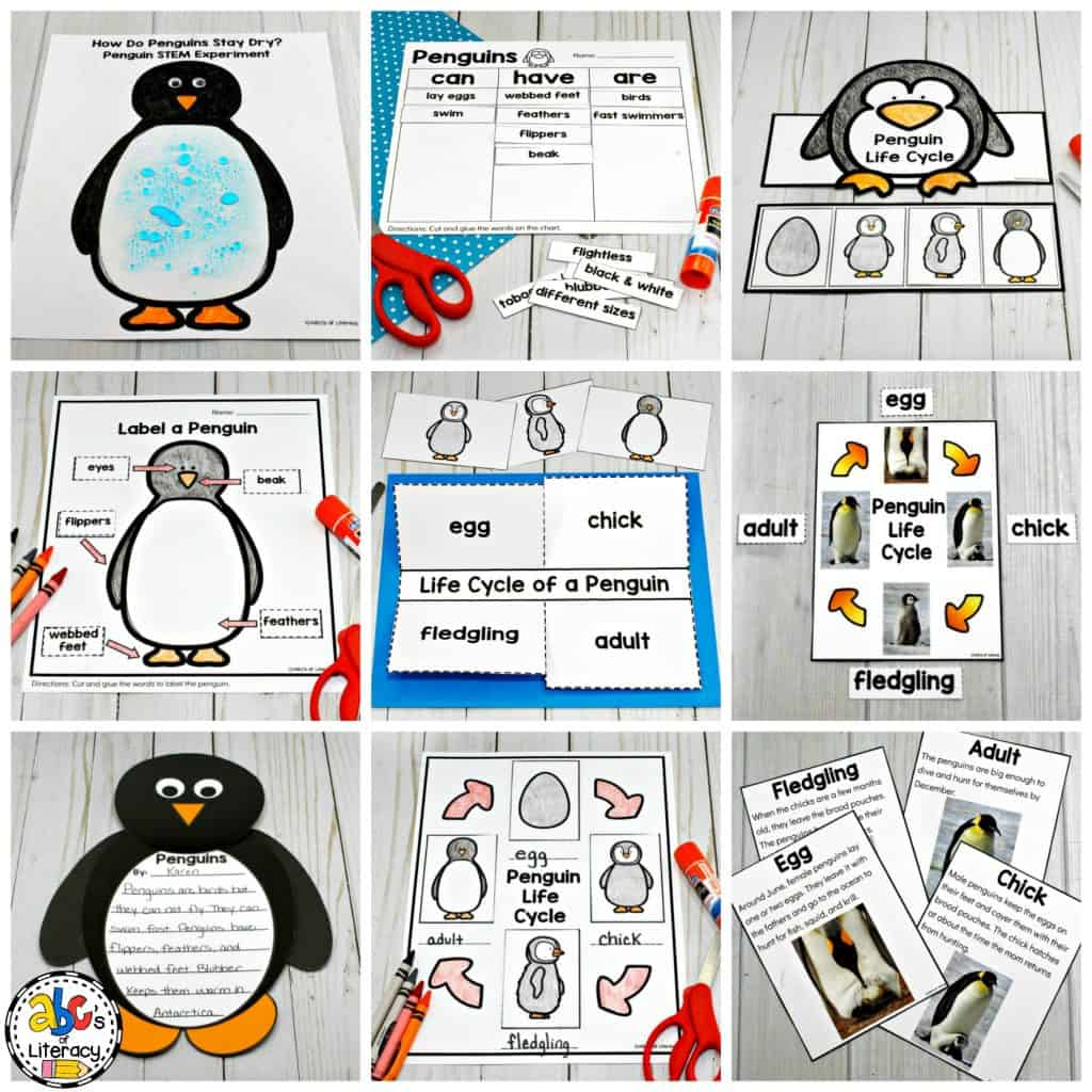 How Do Penguins Stay Dry Penguin Science Experiment