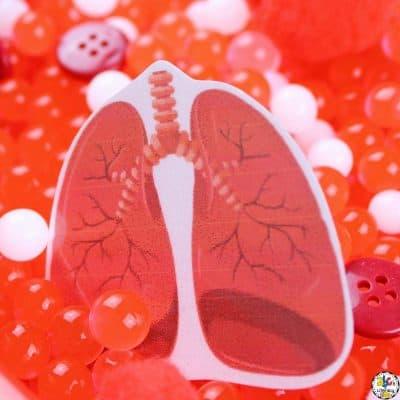 Inside My Body Sensory Bin