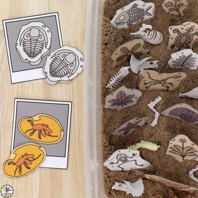Fossil Sensory Bin: A Visual Discrimination Activity