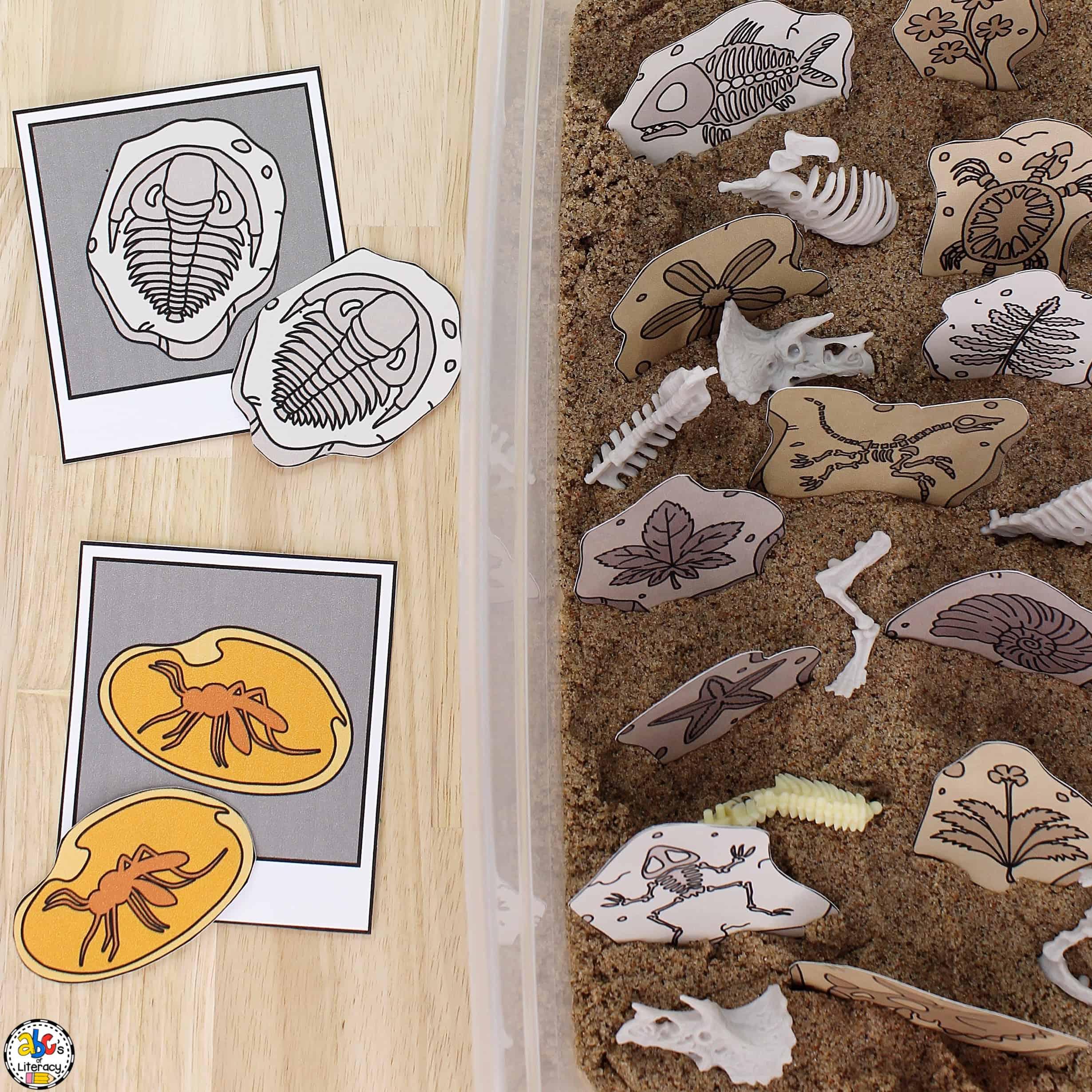 Fossil Sensory Bin