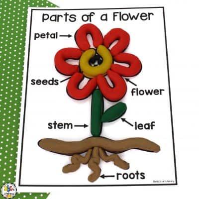 Flower Parts Play Dough Mat