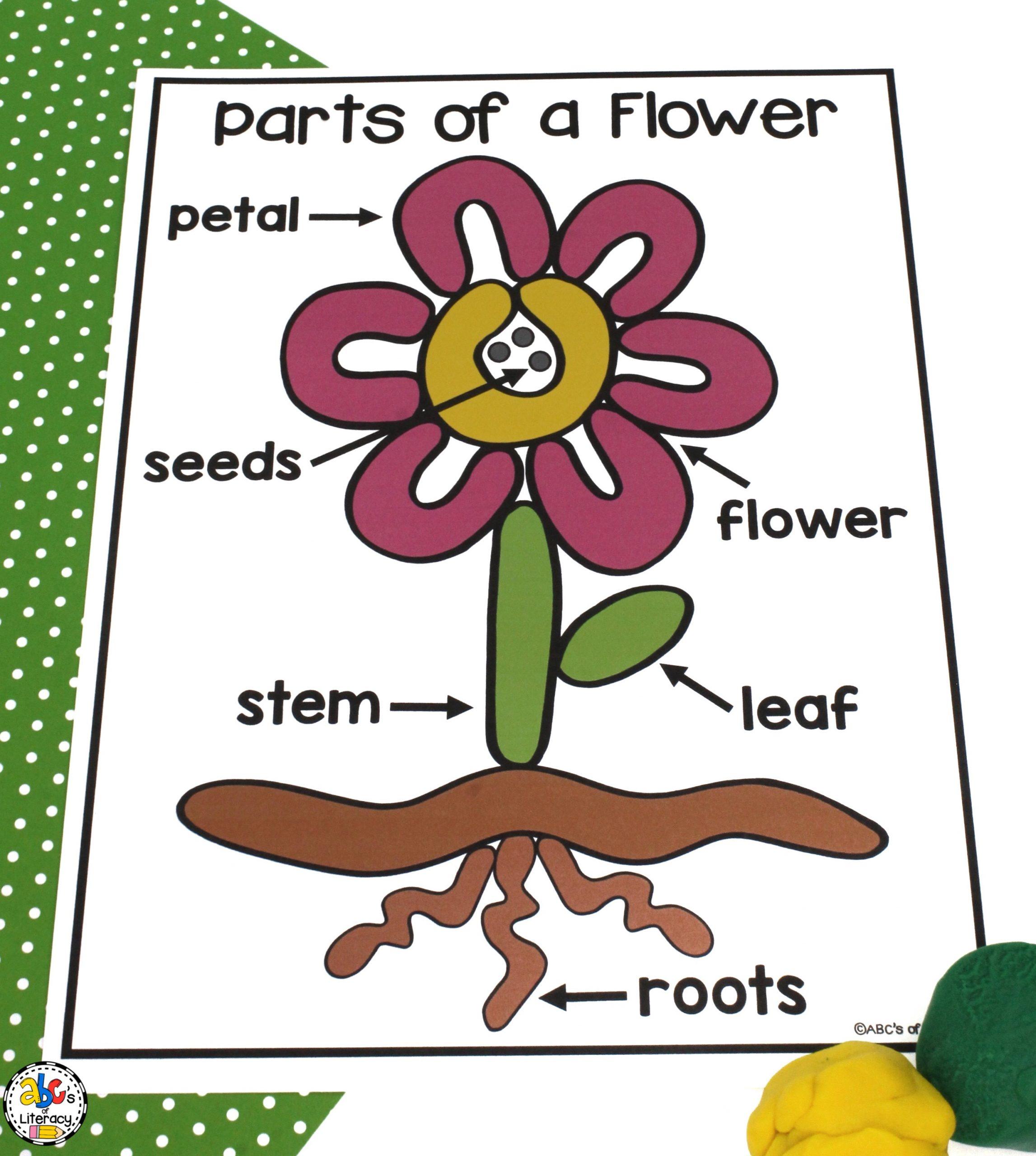 Parts of a Flower Play Dough Mat