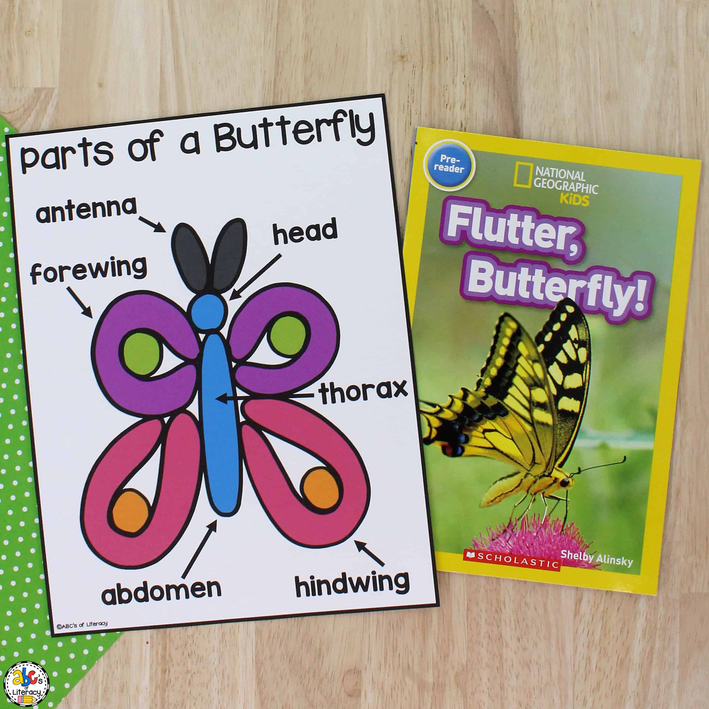 Butterfly Parts Activity for Kids