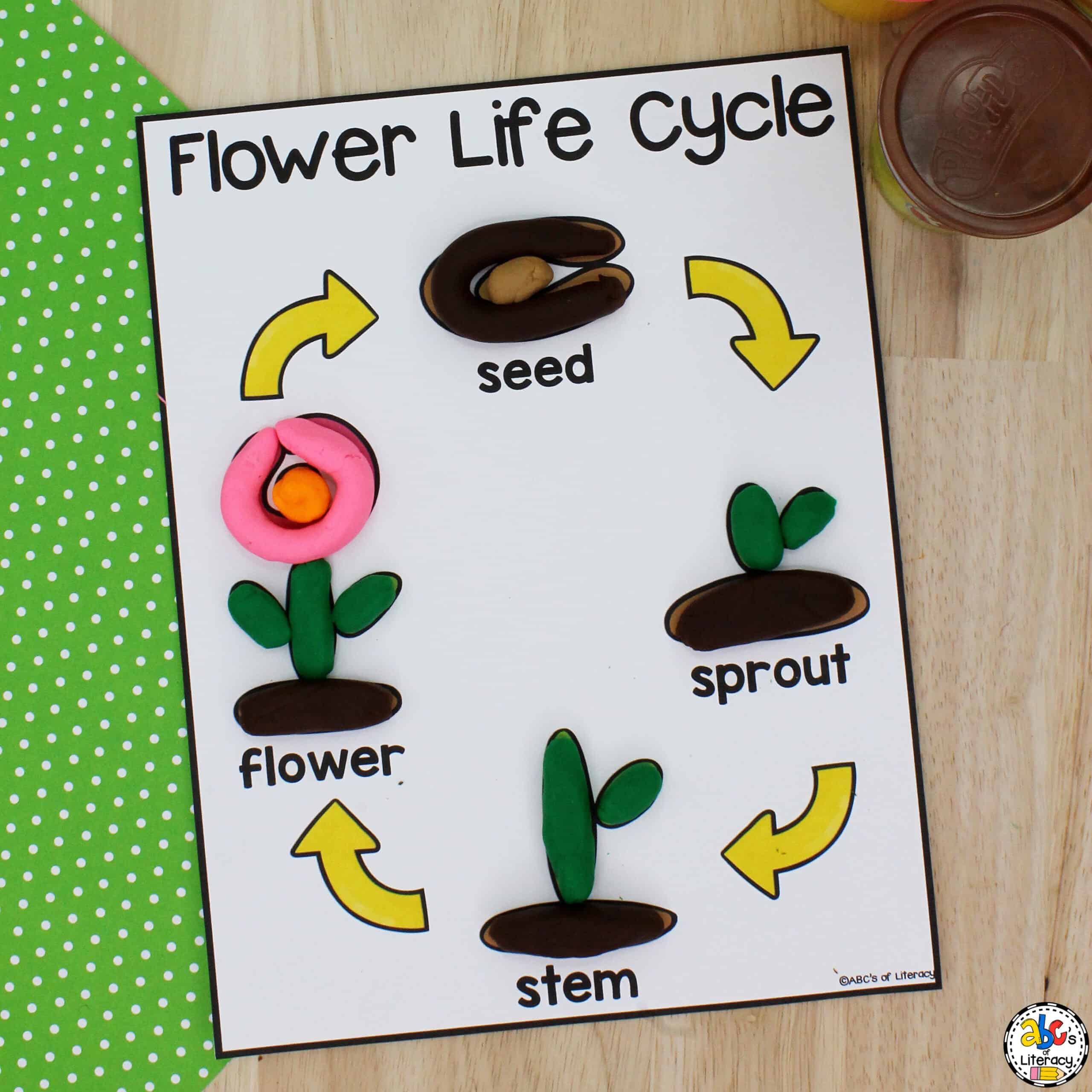 Flower Life Cycle Activity