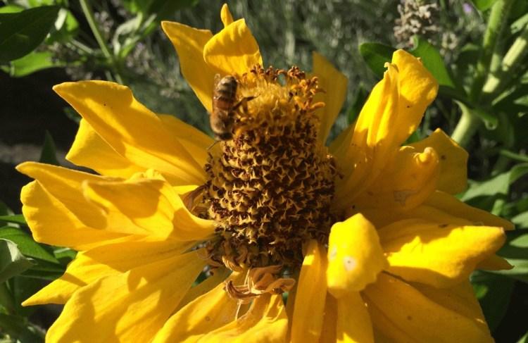 bee-on-yellow-2