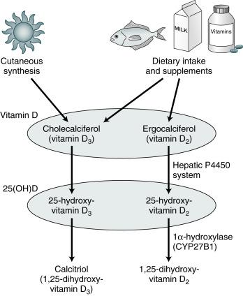 Vitamin D Disorders In Chronic Kidney Disease Abdominal Key