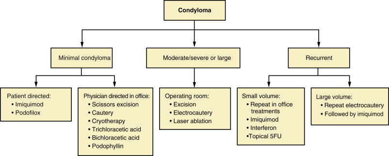 condyloma acuminata epidemiology)