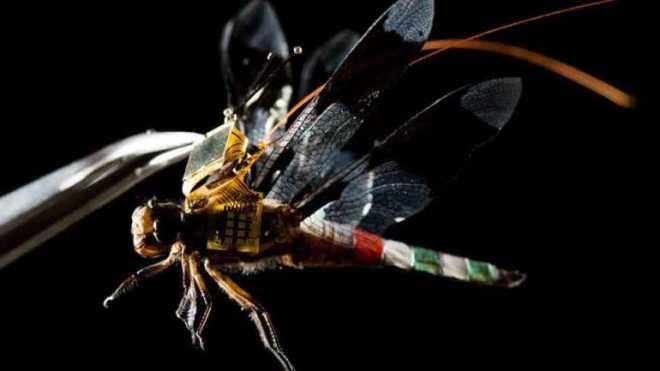 Böçek Dronlar Geliştirildi - Bilim