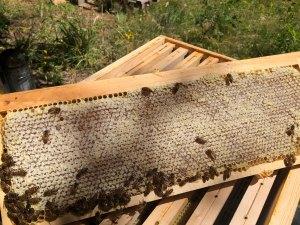 cadre-miel-ruche-dadant.jpg