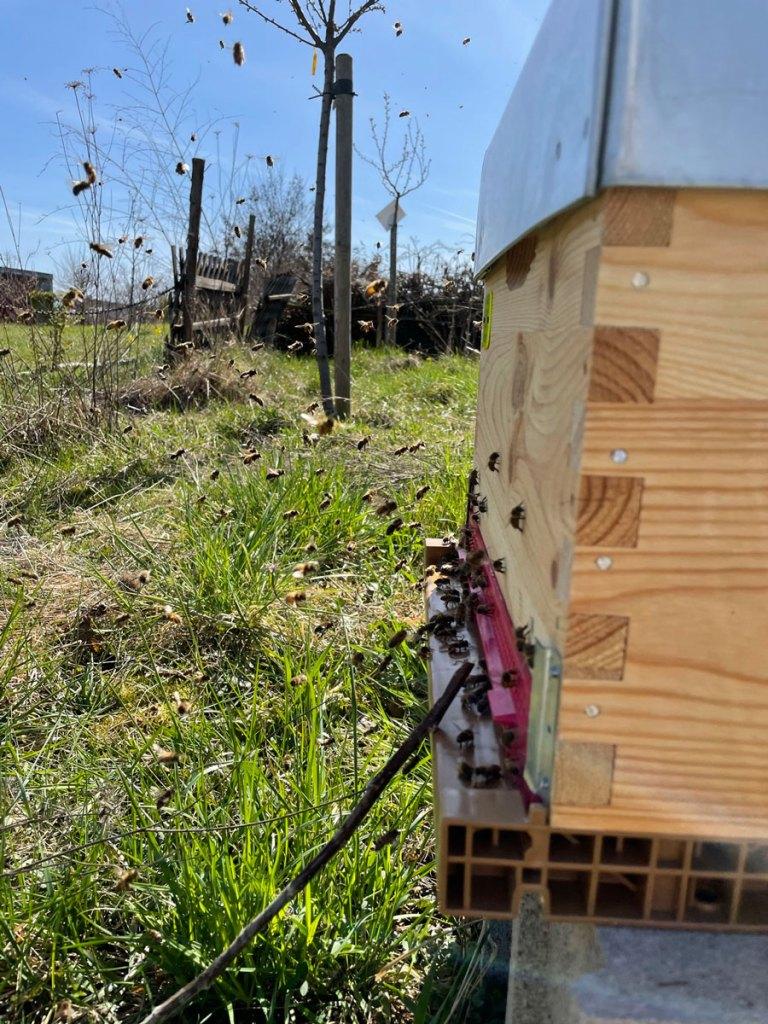 On Gère Pour Vous - STRASBOURG - Installation ruche - 05