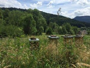Ruche warré dans les montagnes des Vosges