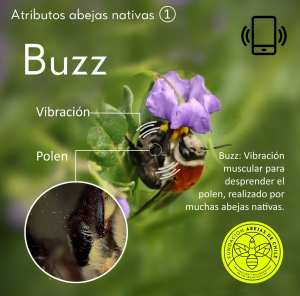 pablo-vial-Valdés-Fundación-Abejas-de-Chile-nativa-buzz-abejasdechile.com-foundation-bees