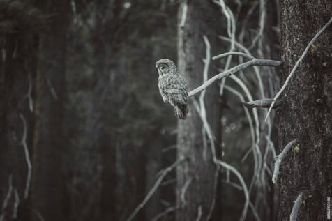OwlSpotting2