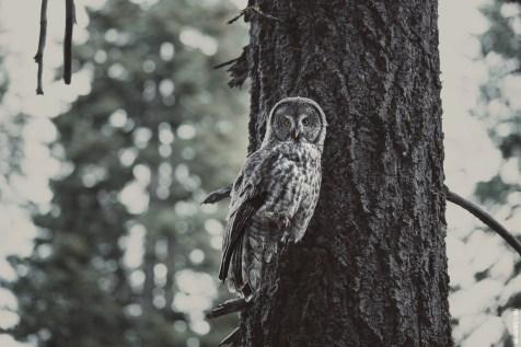 owlspotting