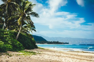 hawaiipalms_horizontal